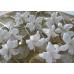 Тычинки для цветов белые, 94 шт